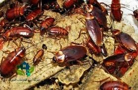 شركة مكافحة الصراصير بالرياض, شركة مكافحة النمل الابيض بالرياض