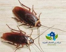 شركة مكافحة حشرات بالرياض رخيصة